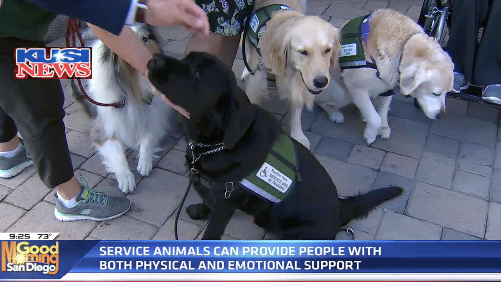 Pawsitive Teams on KUSI-TV San Diego