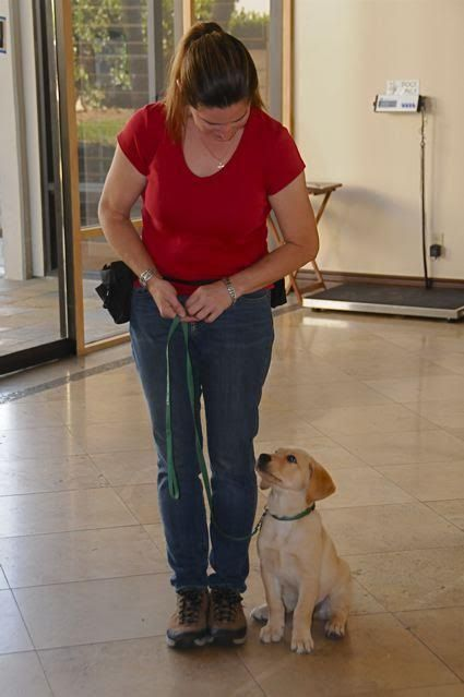10 week year old pup in training Monty with service dog trainer Elaine