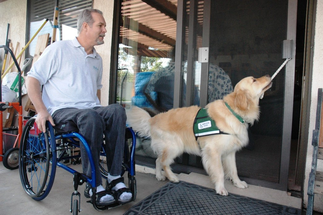 Service Dog Assisting With Sliding Door