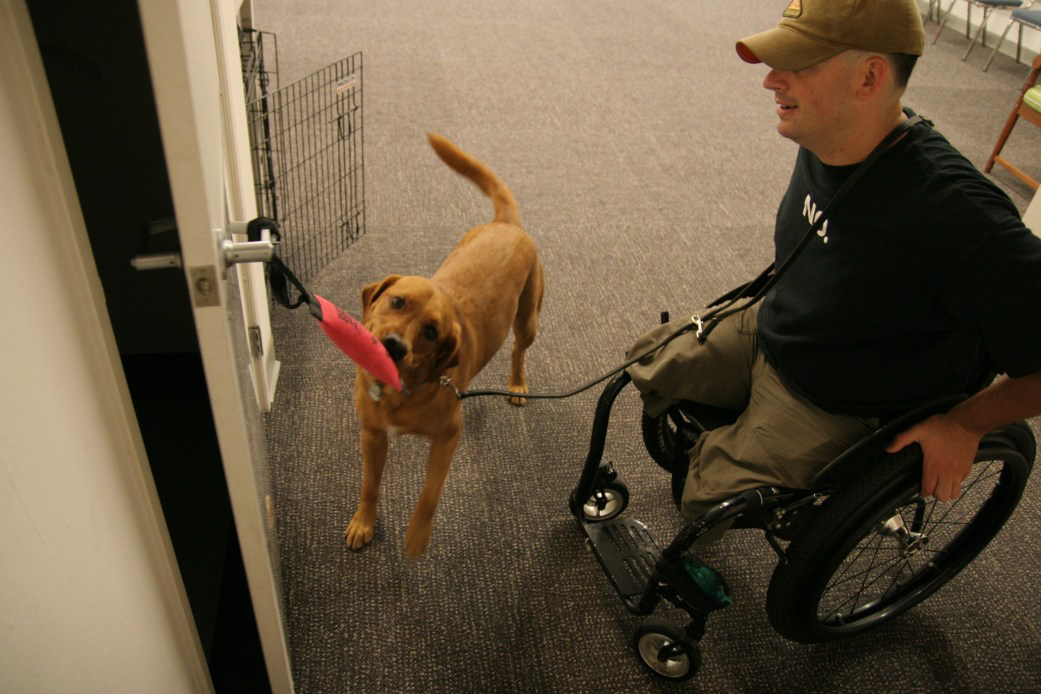 Service Dog Helping With Door