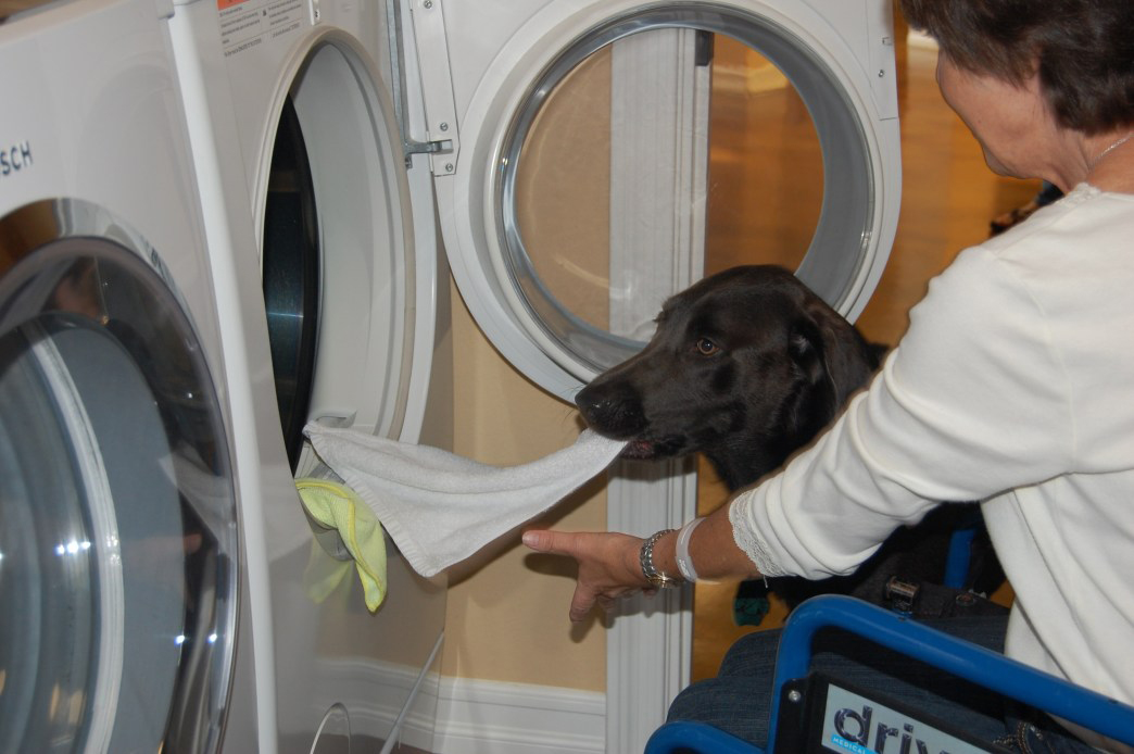 Service Dog Helping With Laundry